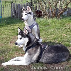 Lady-Wolve_und_Sylar_shadow-store
